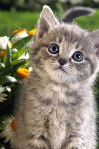 Кошечки картинки - прикольные и красивые на заставку телефона 10
