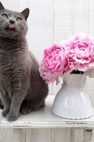 Кошечки картинки - прикольные и красивые на заставку телефона 11