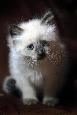 Кошечки картинки - прикольные и красивые на заставку телефона 16
