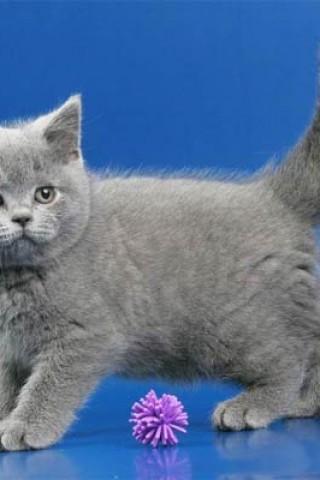 Кошечки картинки - прикольные и красивые на заставку телефона 3