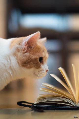 Кошечки картинки - прикольные и красивые на заставку телефона 6