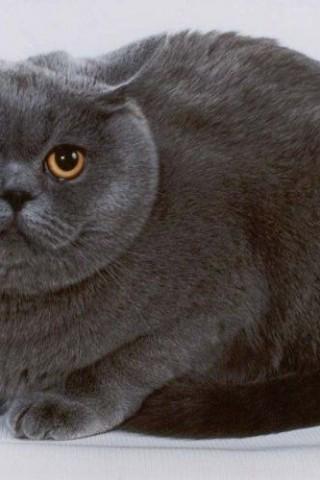 Кошечки картинки - прикольные и красивые на заставку телефона 7