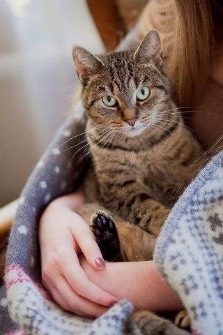 Кошечки картинки - прикольные и красивые на заставку телефона 8