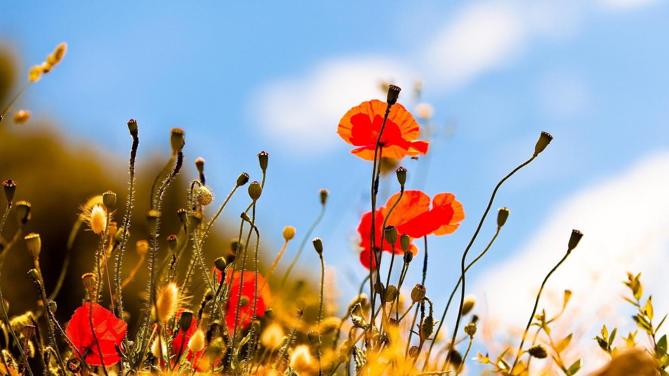 Красивые картинки на рабочий стол про лето и его пейзажи природы 2