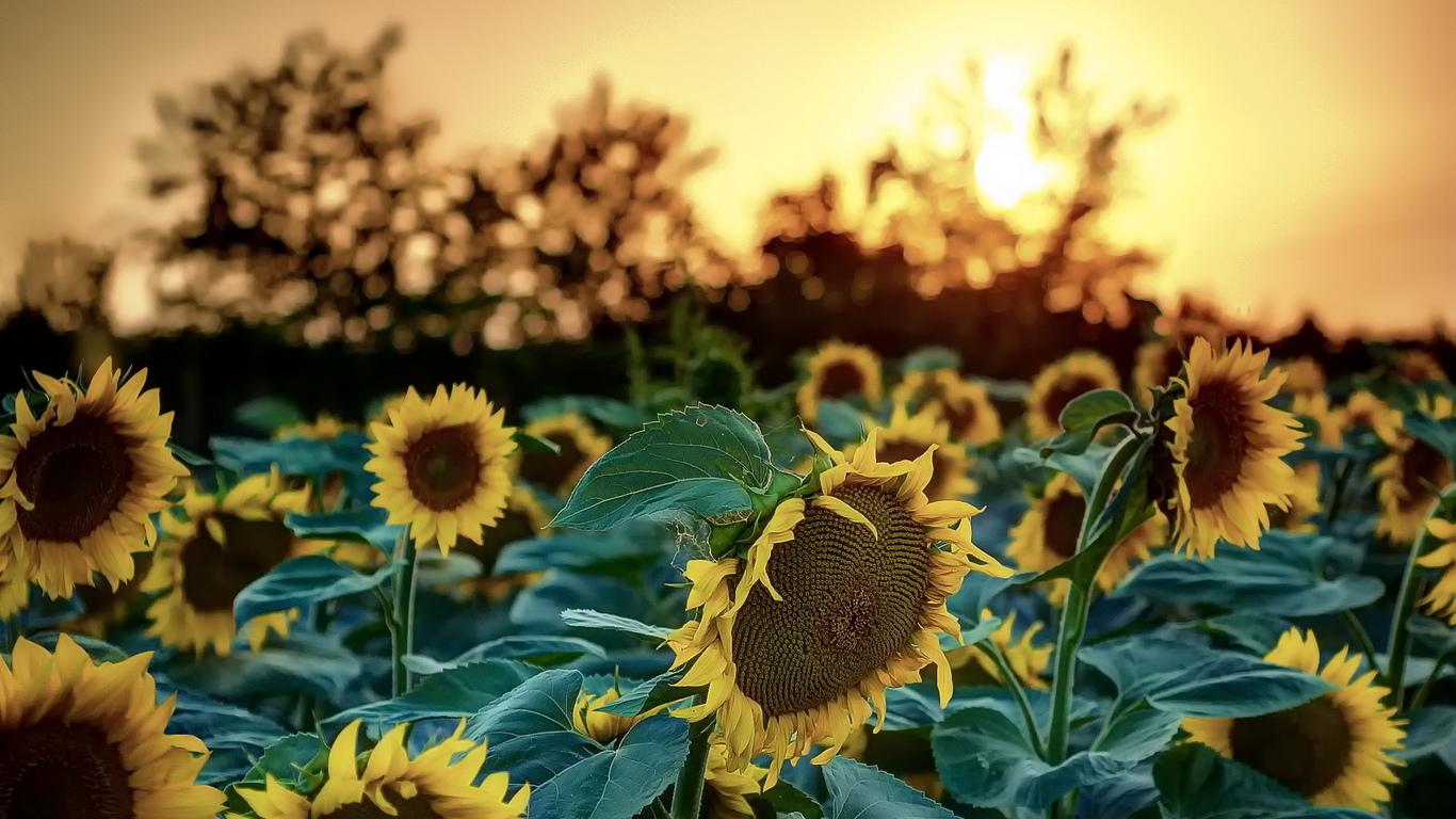 Красивые картинки на рабочий стол про лето и его пейзажи природы 6