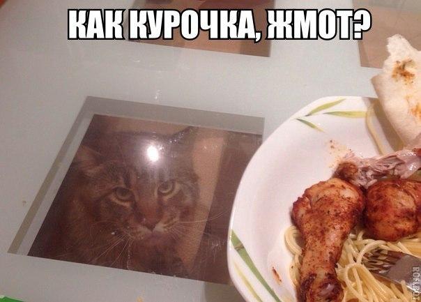 Очень смешные картинки с надписями до слез, лучший юмор - №1 7