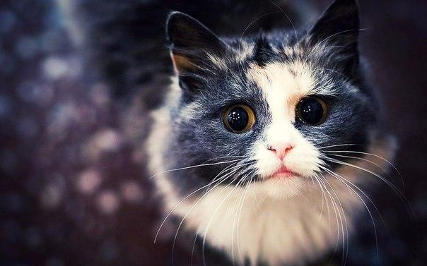 Самые прикольные картинки с котами и кошками - подборка 2018 1