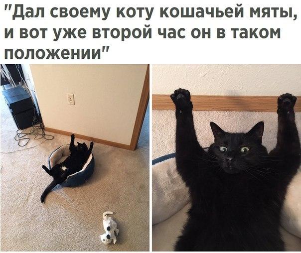 Самые прикольные картинки с котами и кошками - подборка 2018 14