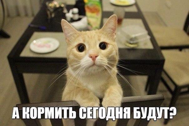 Самые прикольные картинки с котами и кошками - подборка 2018 15