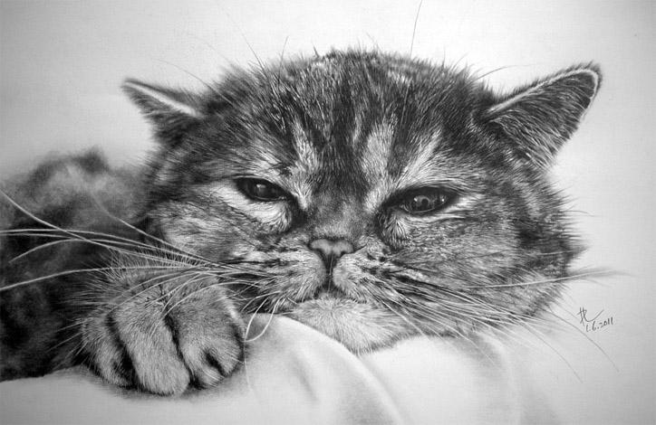 Чёрно-белые рисунки и картинки кошек, котиков - коллекция 13