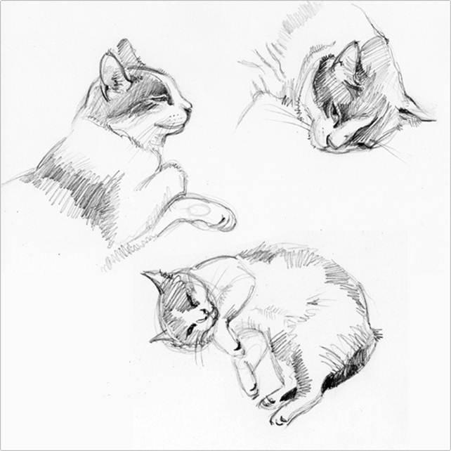 Чёрно-белые рисунки и картинки кошек, котиков - коллекция 4
