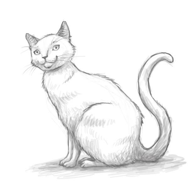 Чёрно-белые рисунки и картинки кошек, котиков - коллекция 5