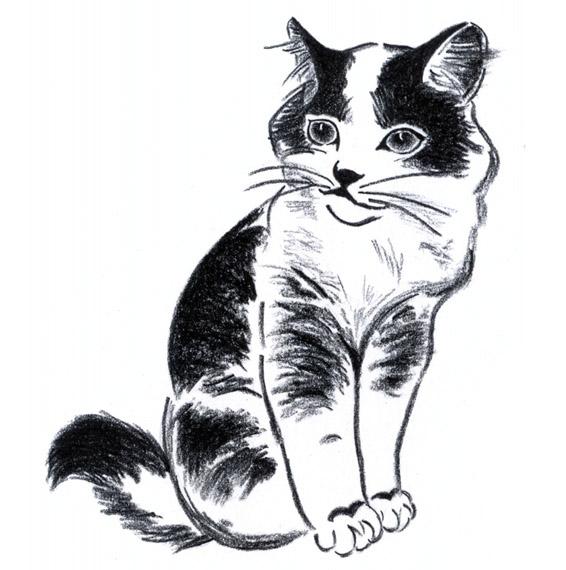 Чёрно-белые рисунки и картинки кошек, котиков - коллекция 7