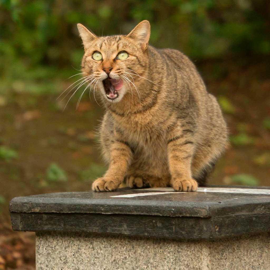 Очень смешные картинки и фотографии с котиками, котятами 1