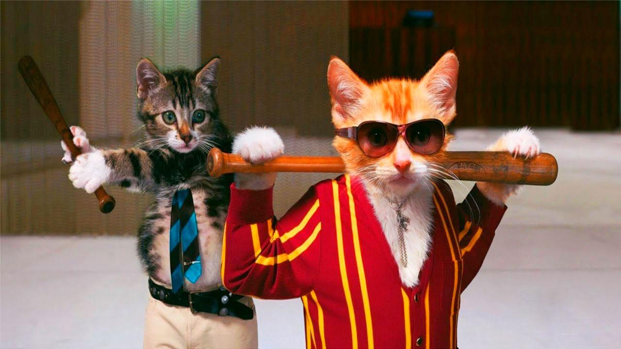Очень смешные картинки и фотографии с котиками, котятами 8
