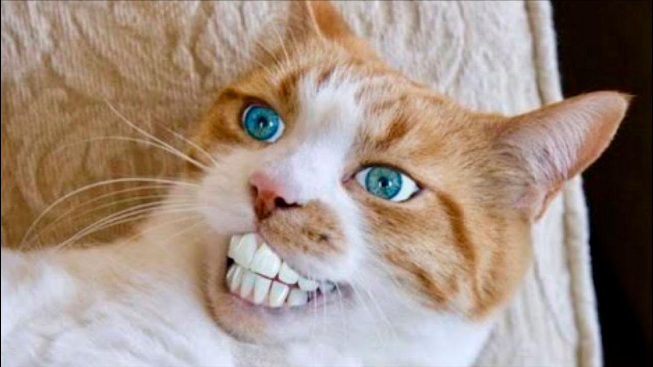 Очень смешные картинки и фотографии с котиками, котятами 9
