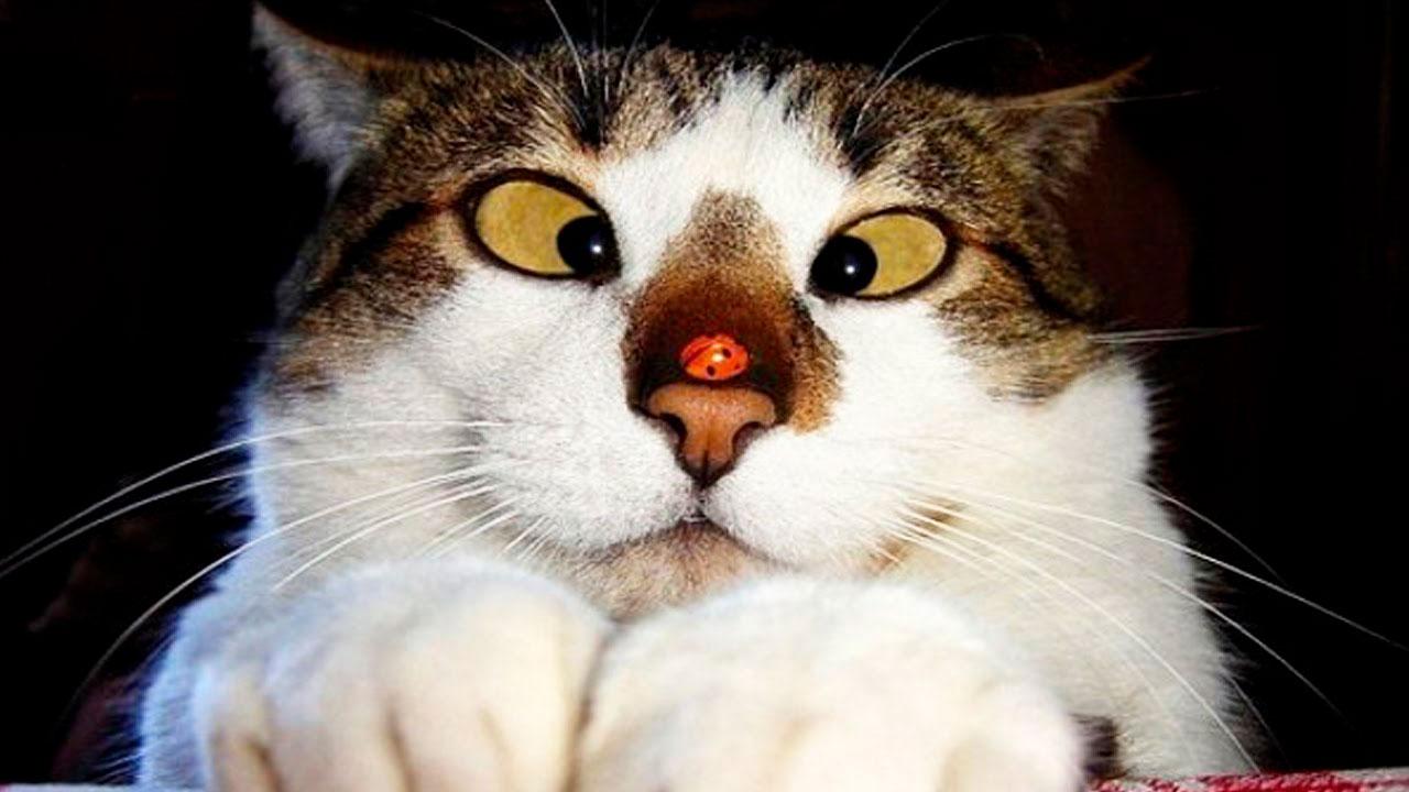Очень смешные картинки и фотографии с котиками, котятами 4