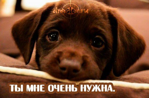 Ты мне нужен - красивые и милые картинки с надписями 2