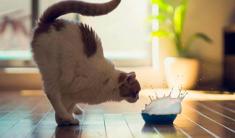 Очень смешные картинки и фотографии с котиками, котятами 5