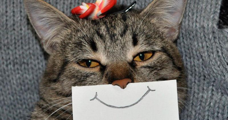 Очень смешные картинки и фотографии с котиками, котятами 6