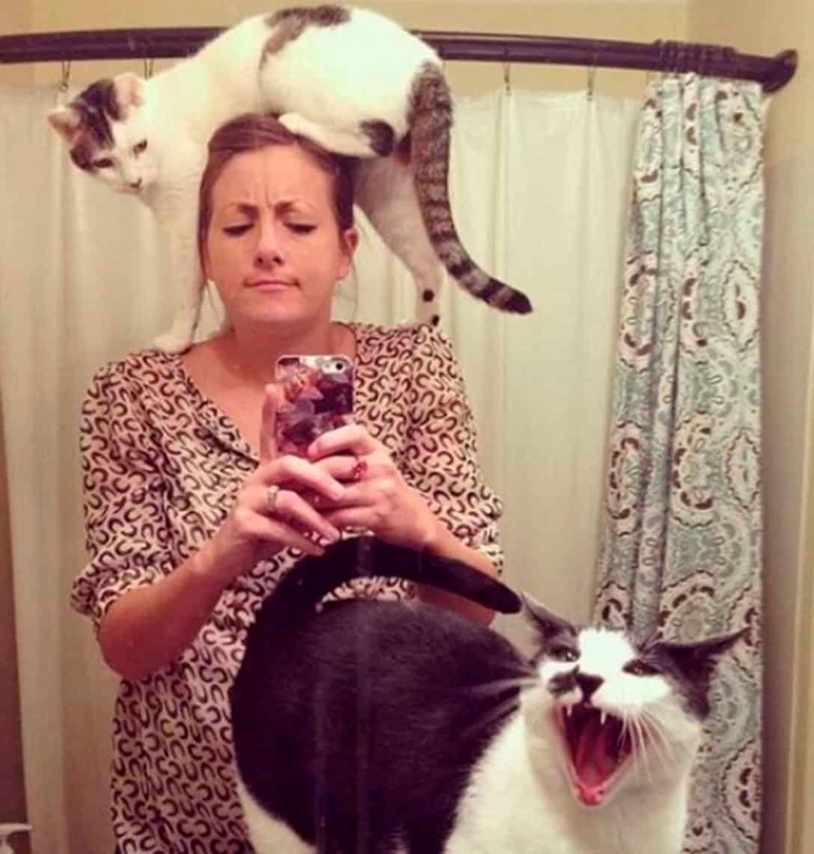 Очень смешные картинки и фотографии с котиками, котятами 7