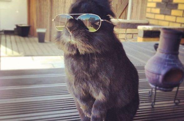 Забавные и смешные фотографии кроликов - подборка 2018 6