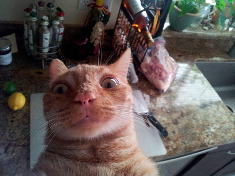 Очень смешные картинки и фотографии с котиками, котятами 11