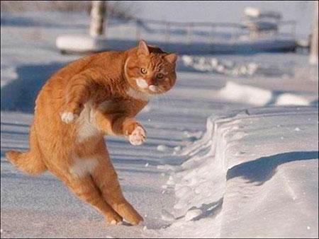 Очень смешные картинки и фотографии с котиками, котятами 12