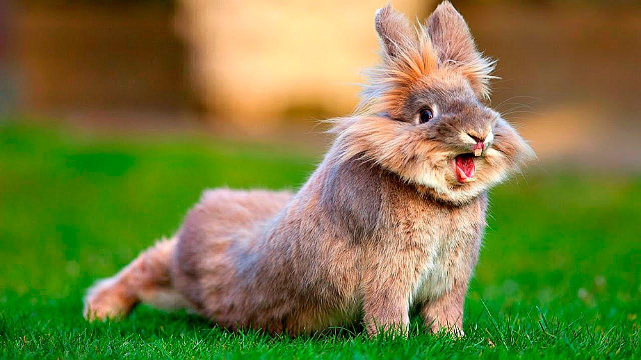 Забавные и смешные фотографии кроликов - подборка 2018 12