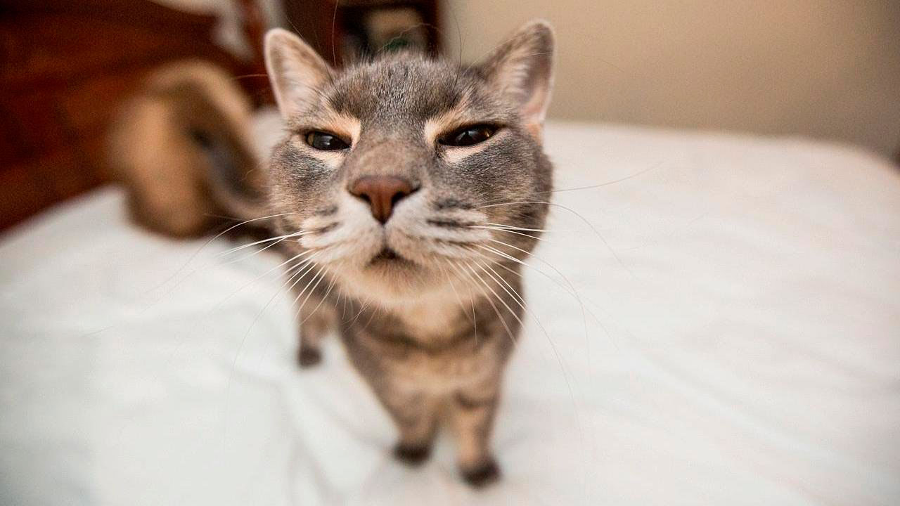 Очень смешные картинки и фотографии с котиками, котятами 13