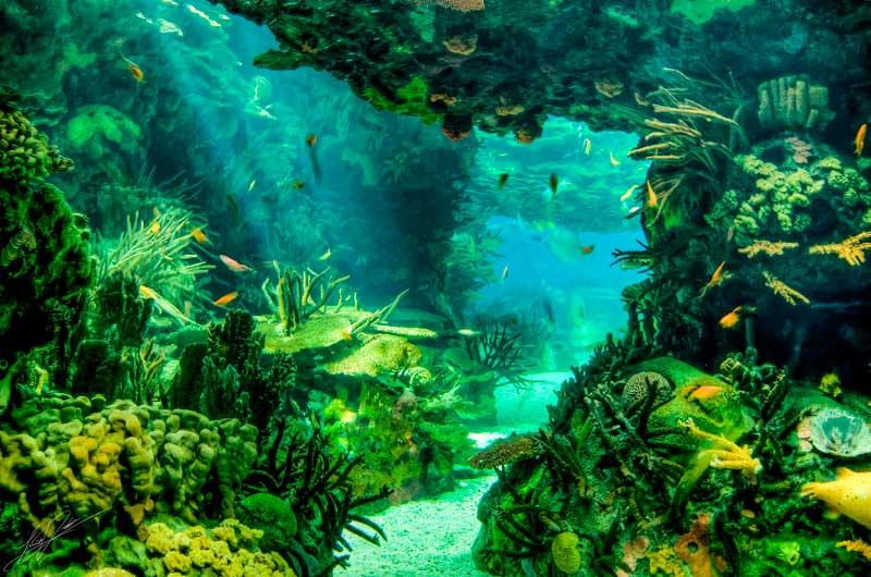 Красивые и прикольные картинки морское дно и морские обитатели