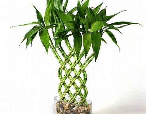 Лучшие комнатные растения для дома - список универсальных растений 2