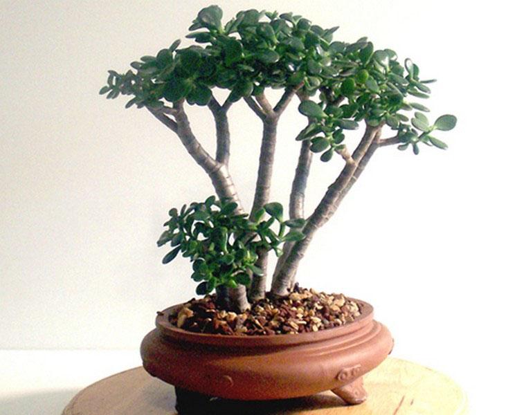 Лучшие комнатные растения для дома - список универсальных растений 4