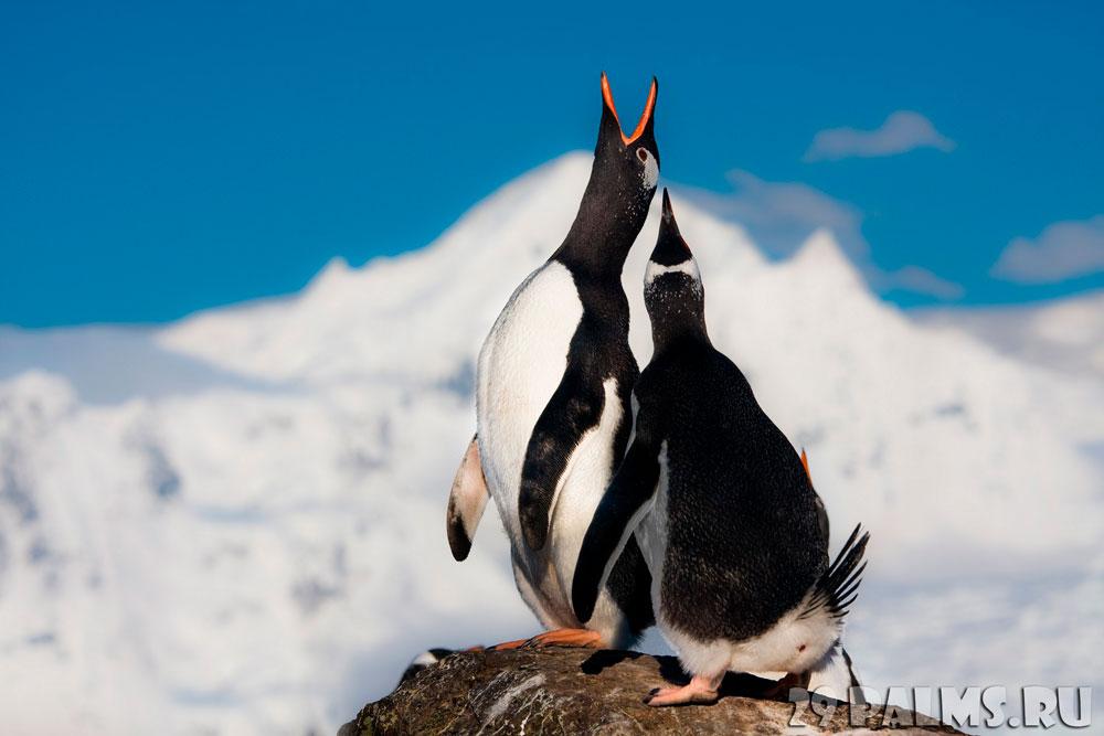 Прикольные и красивые картинки пингвинов - подборка 25 фото 3