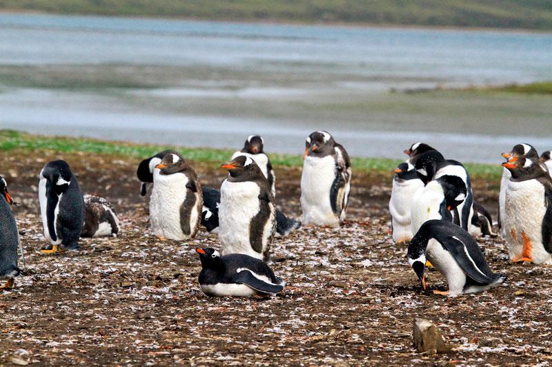 Прикольные и красивые картинки пингвинов - подборка 25 фото 1