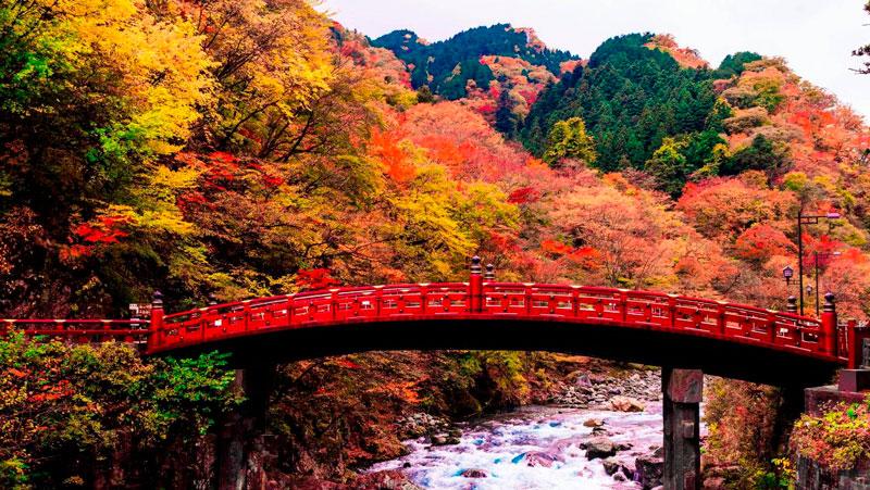 Удивительные и невероятные картинки красной осени - 20 фото 1
