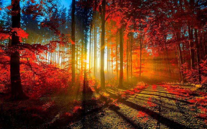 Удивительные и невероятные картинки красной осени - 20 фото 6
