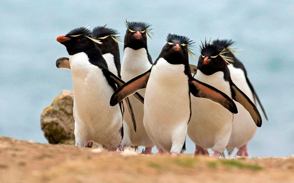 Прикольные и красивые картинки пингвинов - подборка 25 фото 10