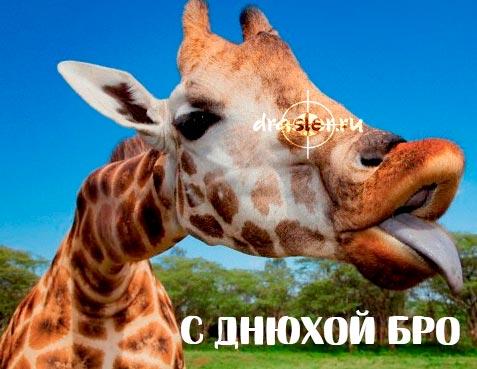 """2-4Приятные и прикольные картинки """"С Днем Рождения братан"""" 1"""