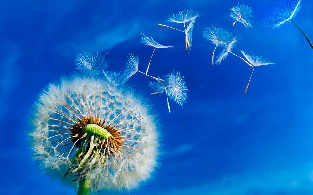 """Красивые и необычные картинки на тему """"Ветер"""" - подборка 1"""