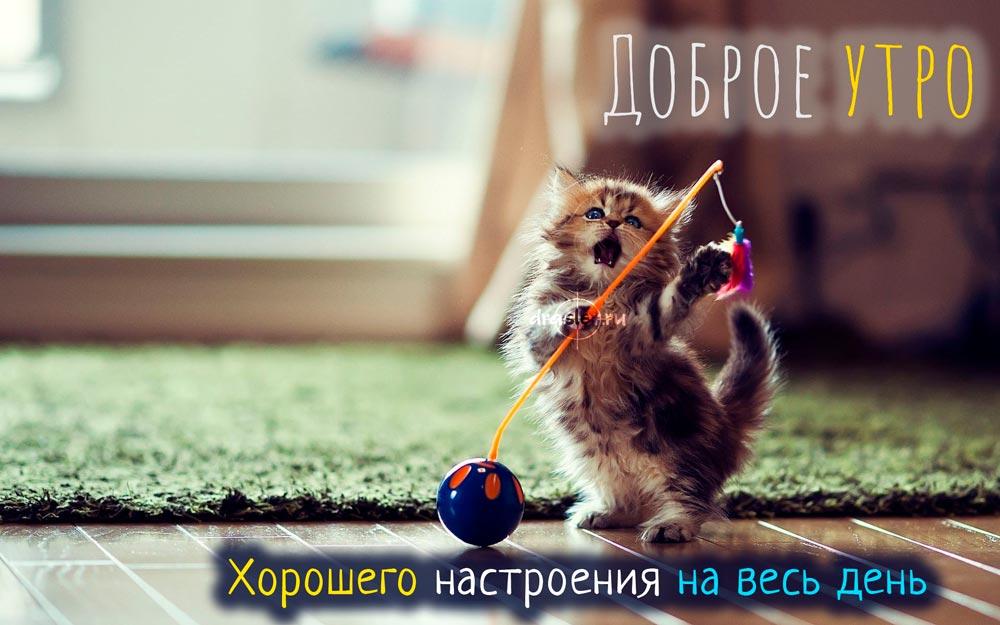 Красивые картинки хорошего утра и настроения - приятные открытки 3