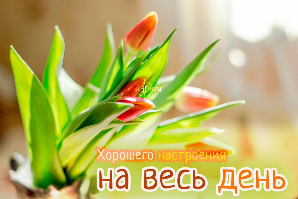 Красивые картинки хорошего утра и настроения - приятные открытки 5