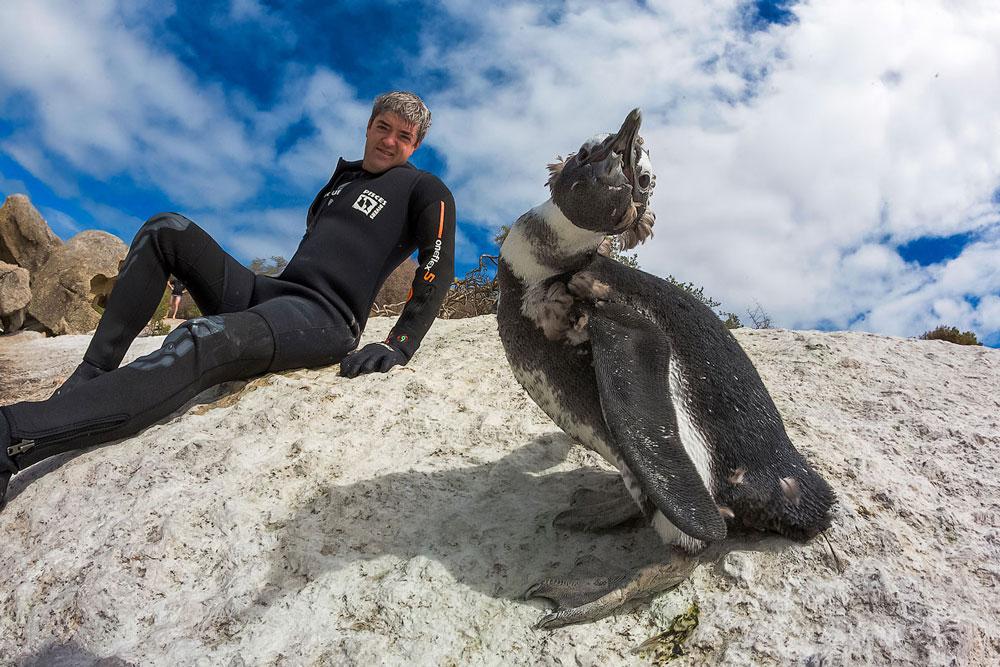 Прикольные и красивые картинки пингвинов - подборка 25 фото 7