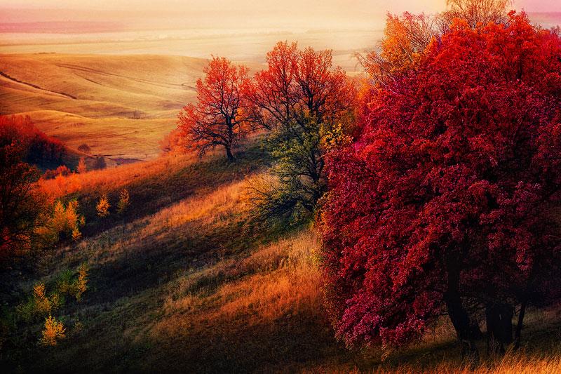 Удивительные и невероятные картинки красной осени - 20 фото 7