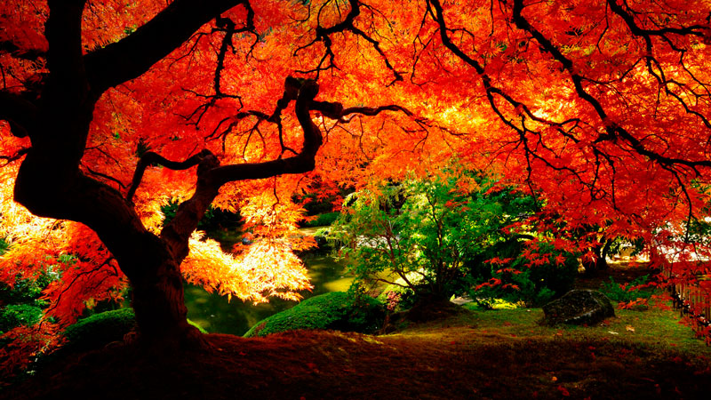 Удивительные и невероятные картинки красной осени - 20 фото 5