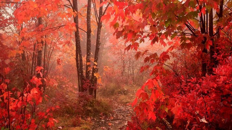 Удивительные и невероятные картинки красной осени - 20 фото 3