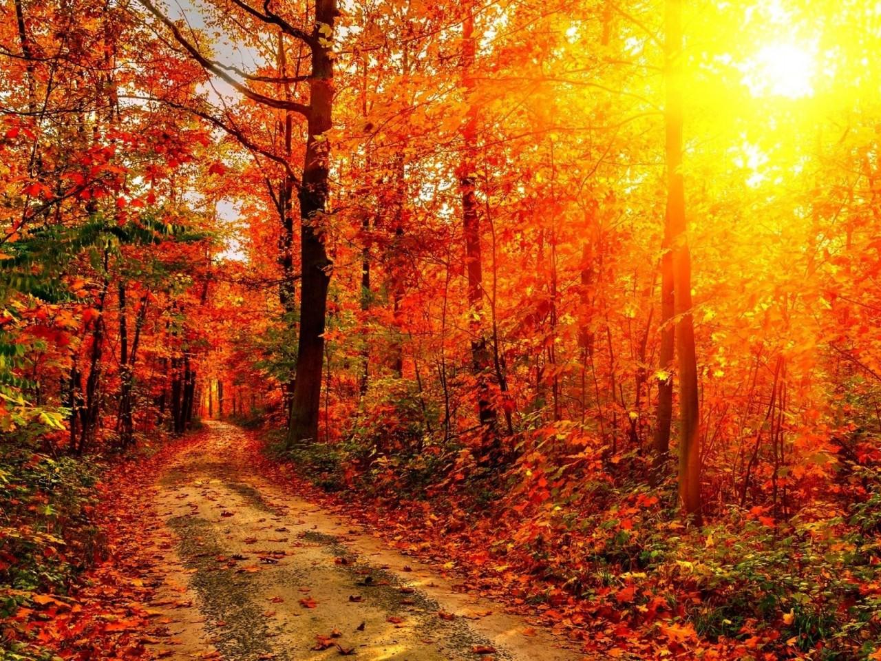 Удивительные и невероятные картинки красной осени - 20 фото 11