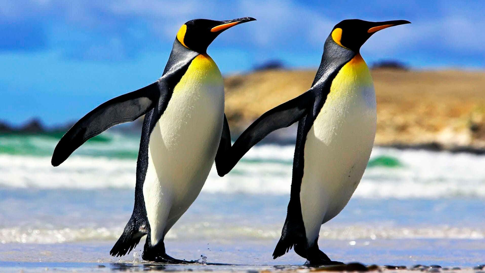 Прикольные и красивые картинки пингвинов - подборка 25 фото 13