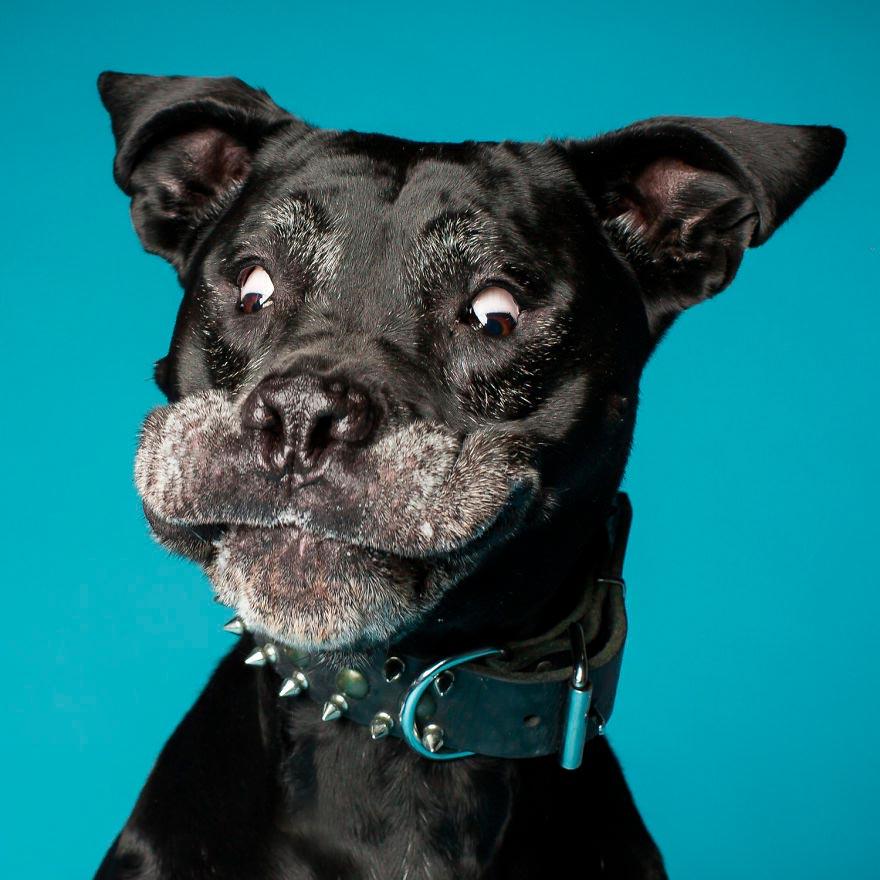 Смешные картинки про собак и щенков - подборка 12