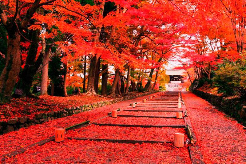 Удивительные и невероятные картинки красной осени - 20 фото 12